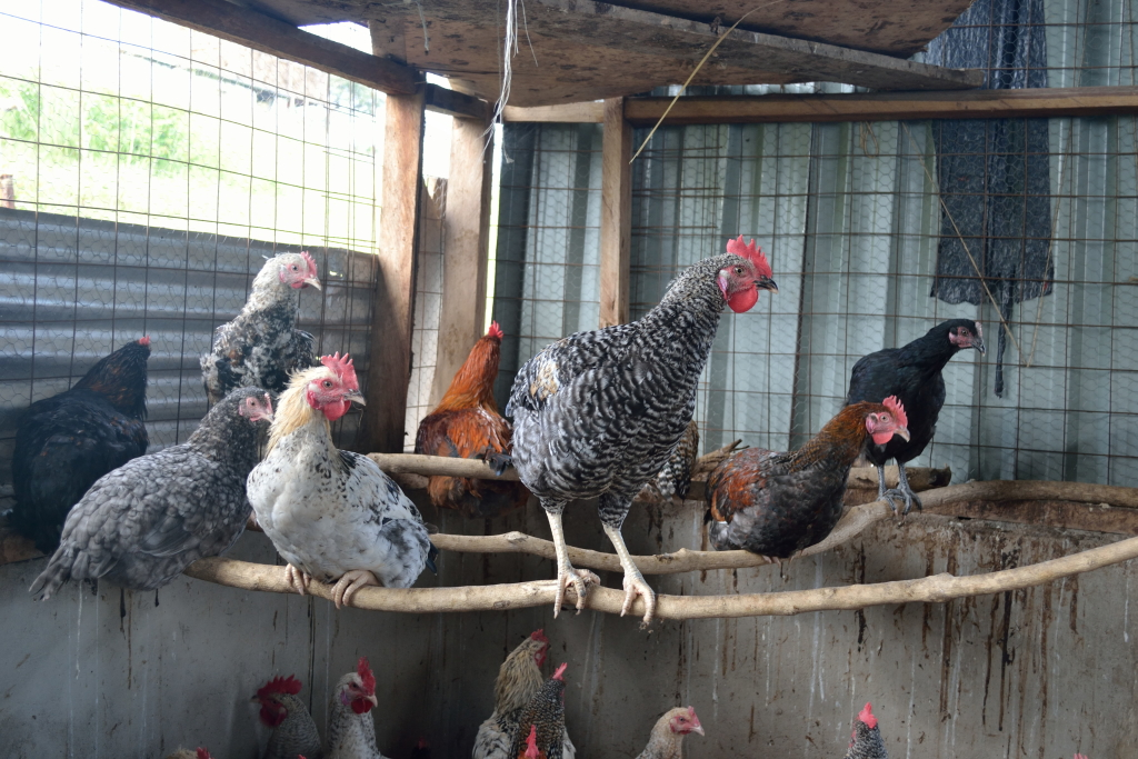 JAMS Poultry Project